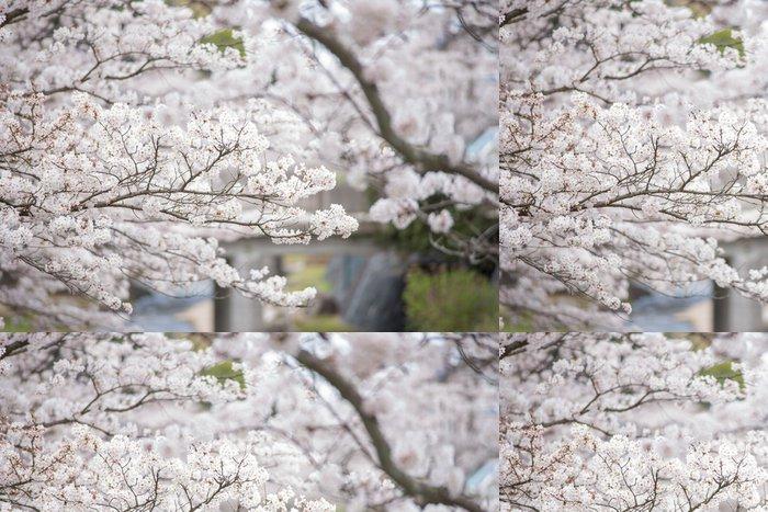 Tapeta Pixerstick 川 面 と 満 開 の 桜 - Roční období