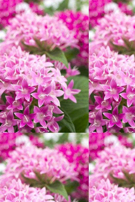 Tapeta Pixerstick ピ ン ク の ペ ン タ ス の 花 - Květiny