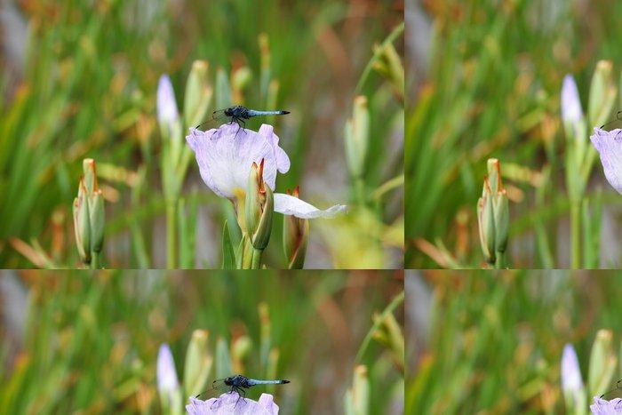 Tapeta Pixerstick 青 い 蜻蛉 と 花 菖蒲 (堀 切 菖蒲 園) - Ostatní Ostatní
