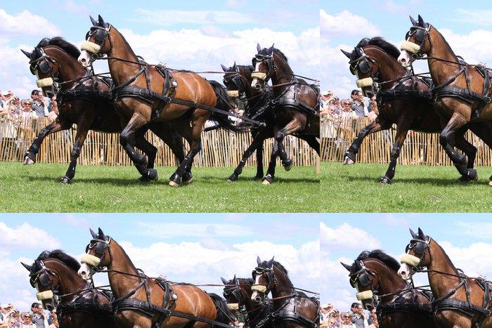 Tapeta Pixerstick 4 kočárové koně - Savci