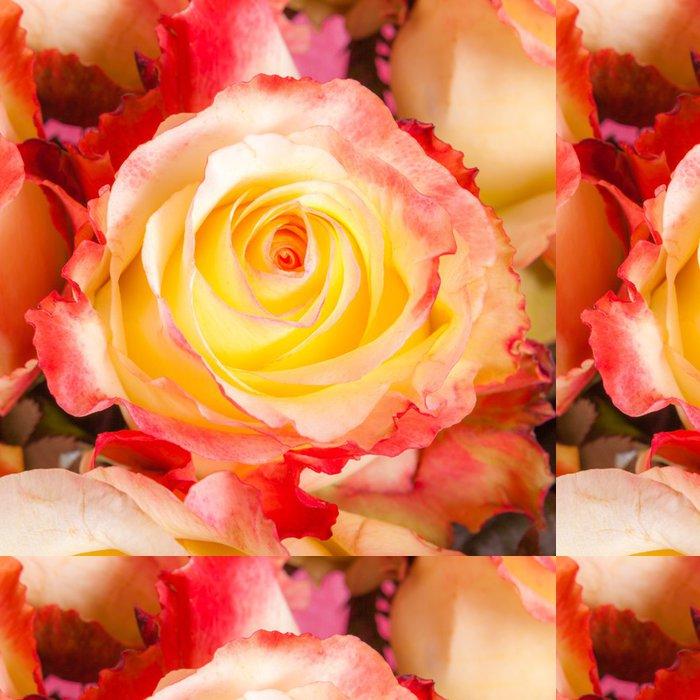 Tapeta Pixerstick Abstraktní pozadí z květin. Close-up. - Květiny