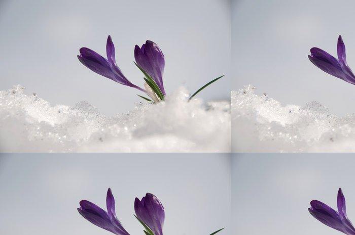 Tapeta Pixerstick šafrán - Květiny
