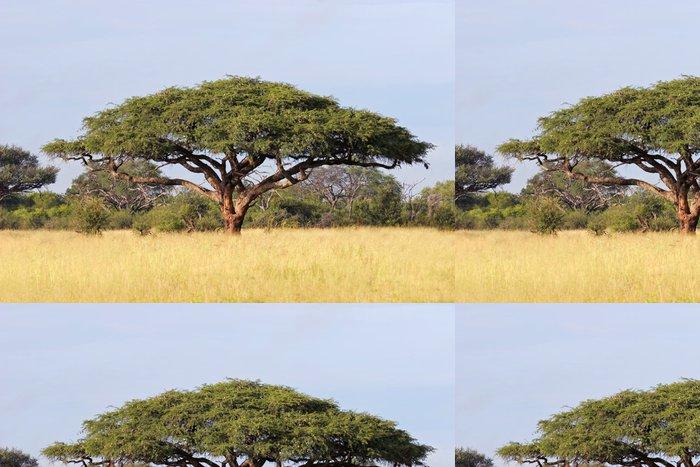 Tapeta Pixerstick African Acacia tree, Hwange National Park - Témata