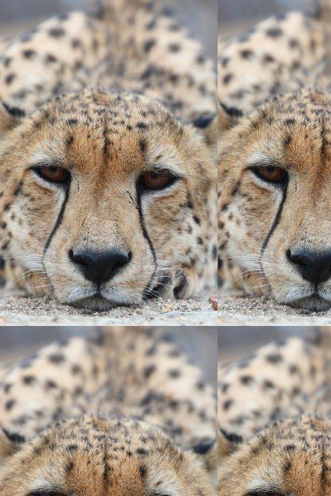 Tapeta Pixerstick African Cheetah - Savci