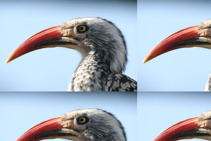 Vinylová Tapeta Africká hornbill pták s velkým zakřiveným zobákem - Ptáci