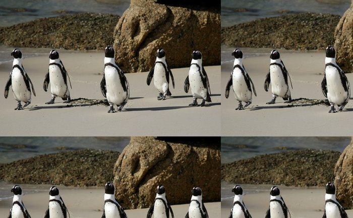 Tapeta Pixerstick Africké Penguins - Ptáci
