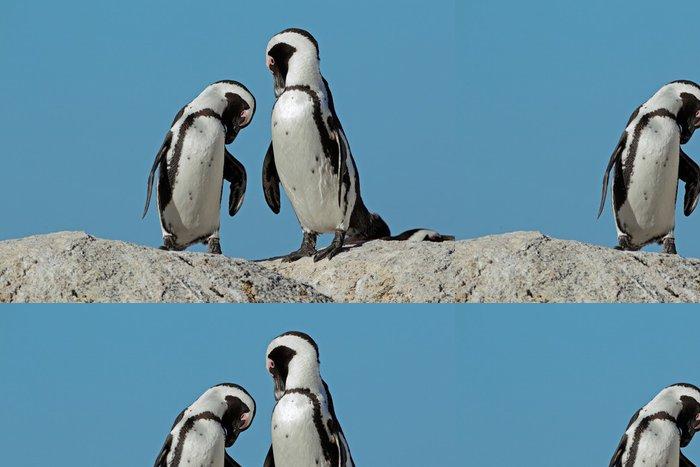 Vinylová Tapeta Afričtí tučňáci proti modré obloze - Ptáci