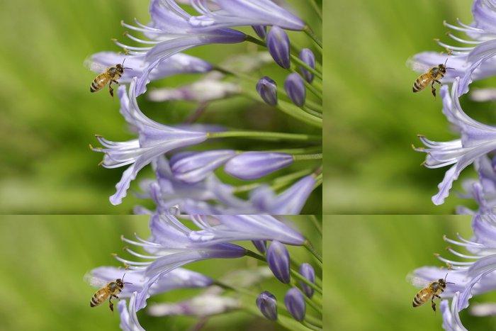 Tapeta Pixerstick Agapanthus a včelí 3 - Ostatní Ostatní
