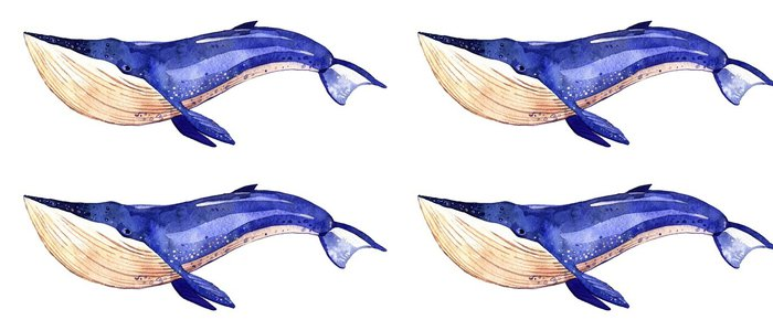 Tapeta Pixerstick Akvarel velryba, ručně malované ilustrace na bílém pozadí - Zvířata