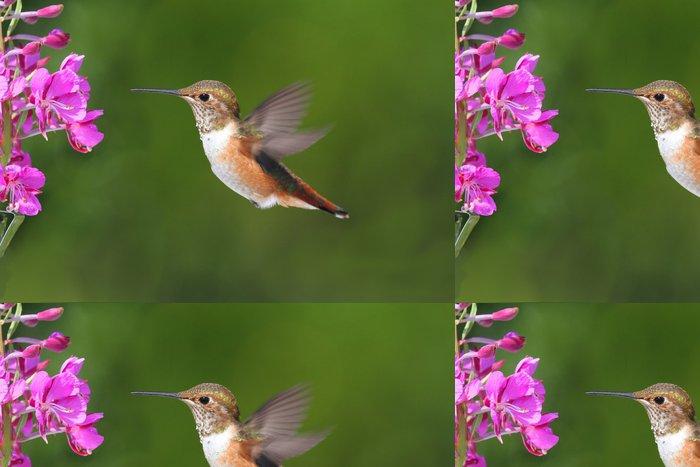 Tapeta Pixerstick Allens Hummingbird (Selasphorus Sasin) - Ptáci