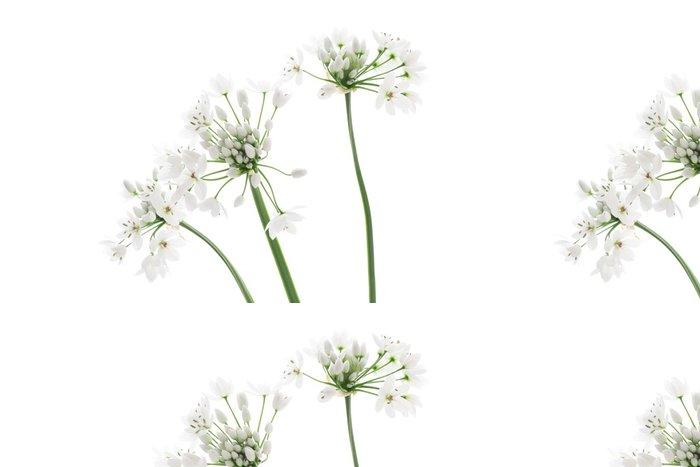 Tapeta Pixerstick Allium neapolitanum izolovaných na bílém pozadí - Květiny