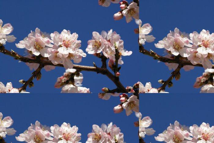 Tapeta Pixerstick Almond květiny - Stromy