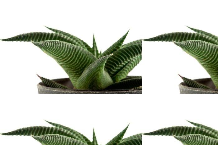 Tapeta Pixerstick Aloe vera v hrnci - Rostliny