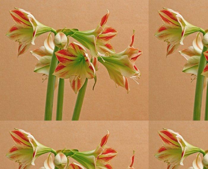 Vinylová Tapeta Amarylis bicolor - Květiny