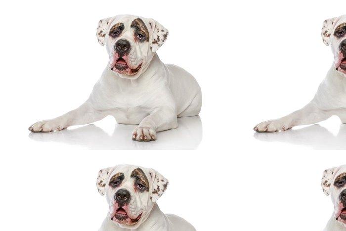 Tapeta Pixerstick American bulldog - Savci