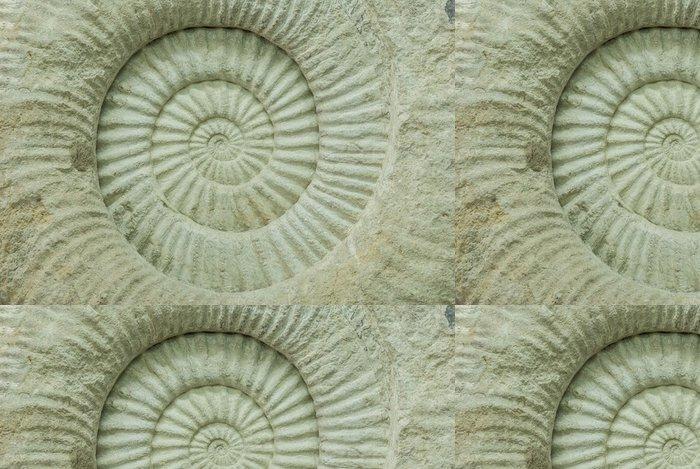Vinylová Tapeta Ammonite prehistorické fosilie shell průřez textury - Vodní a mořský život