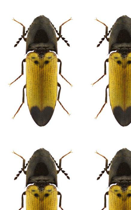 Vinylová Tapeta Ampedus quadrisignatus - Ostatní Ostatní
