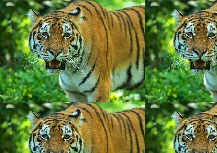 Vinylová Tapeta Amur Tiger - Témata