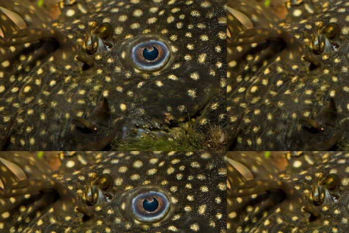 Tapeta Pixerstick Ancitrus pleco - Vodní a mořský život
