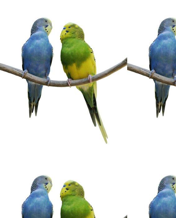 Tapeta Pixerstick Andulka Papoušci - Ptáci