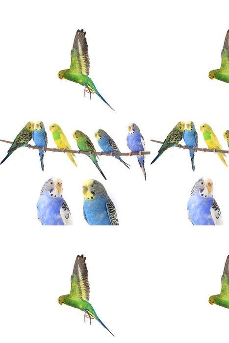 Vinylová Tapeta Andulka - Ptáci