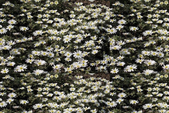 """Vinylová Tapeta Anemone blanda 'White Splendour """"- řecký Windflower - Květiny"""
