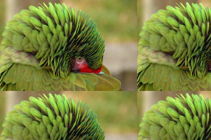 Vinylová Tapeta Ara zelený skrývá zobákem - Ptáci