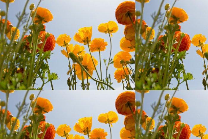 Tapeta Pixerstick Asijský Ranunculus květiny - Květiny