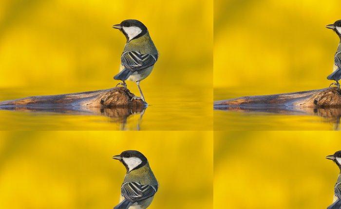 Tapeta Pixerstick Atardecer Amarillo. - Ptáci