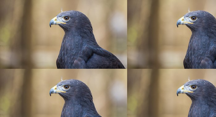 Tapeta Pixerstick Augur Buzzard - Ptáci