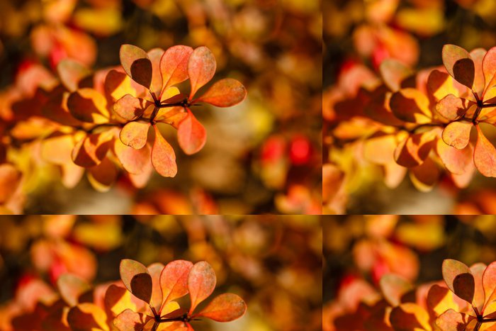 Vinylová Tapeta Autumn leaves - Rostliny