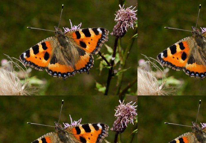 Tapeta Pixerstick Babočka motýl, bodlák - Roční období