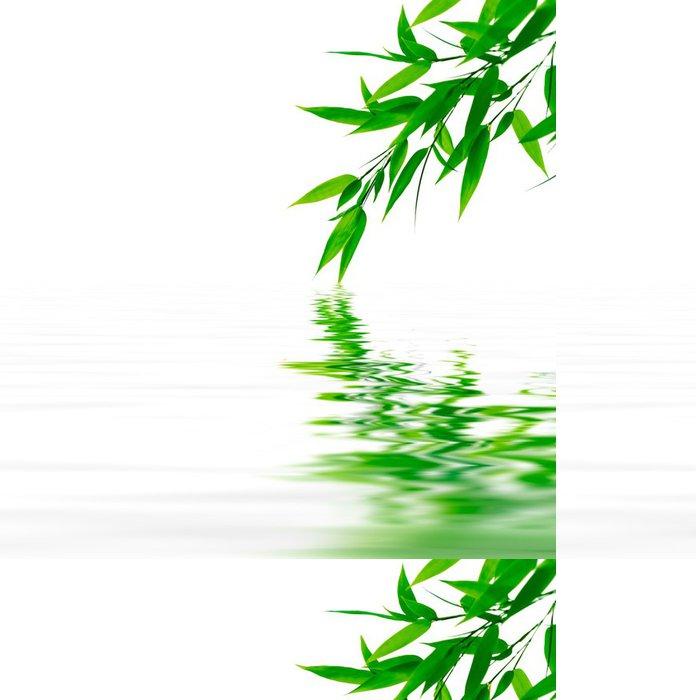 Tapeta Pixerstick Bambusové větve dotýkají vodu - Rostliny