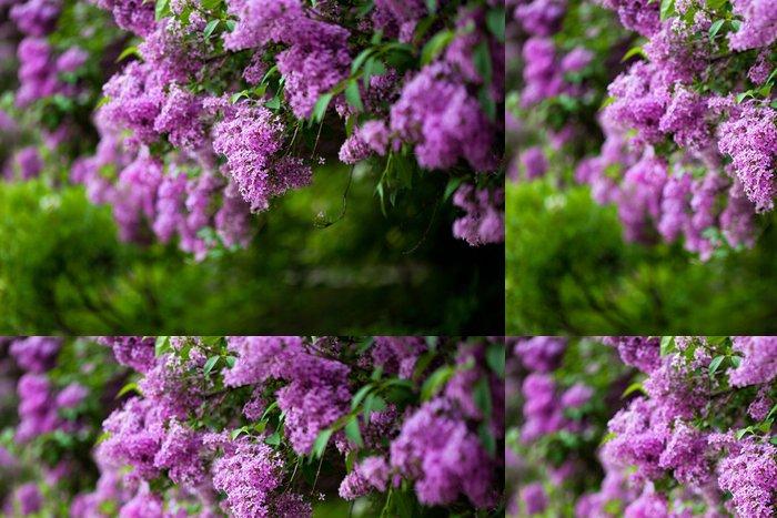Tapeta Pixerstick Banda fialové lila květ (mělký DOF) - Květiny