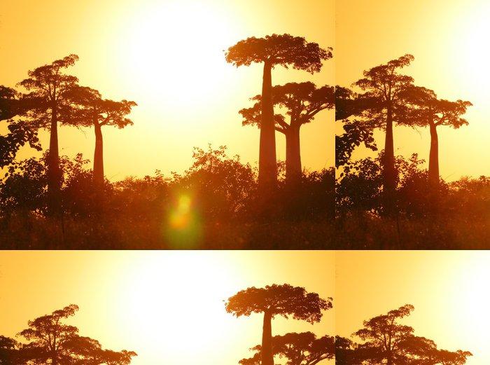 Tapeta Pixerstick Baobab - Témata