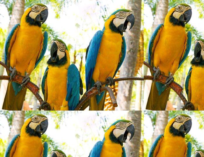Tapeta Pixerstick Barevné blue papoušek papoušek na bílém pozadí - Témata