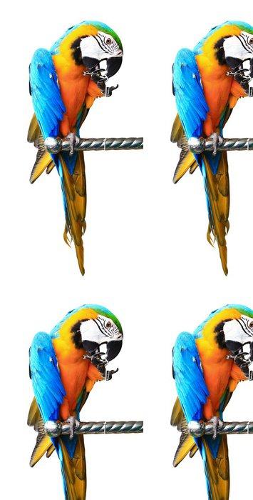 Vinylová Tapeta Barevné červený papoušek izolovaných na bílém pozadí - Nálepka na stěny
