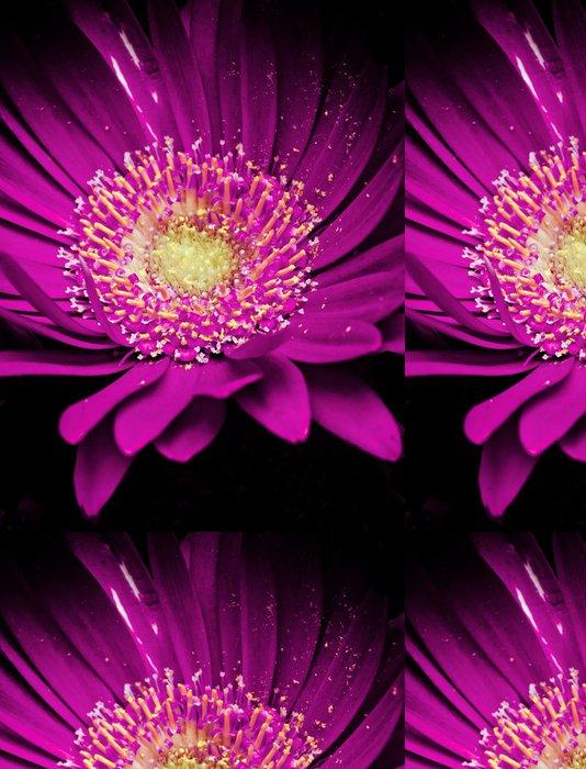 Tapeta Pixerstick Barevné germini květina - Květiny