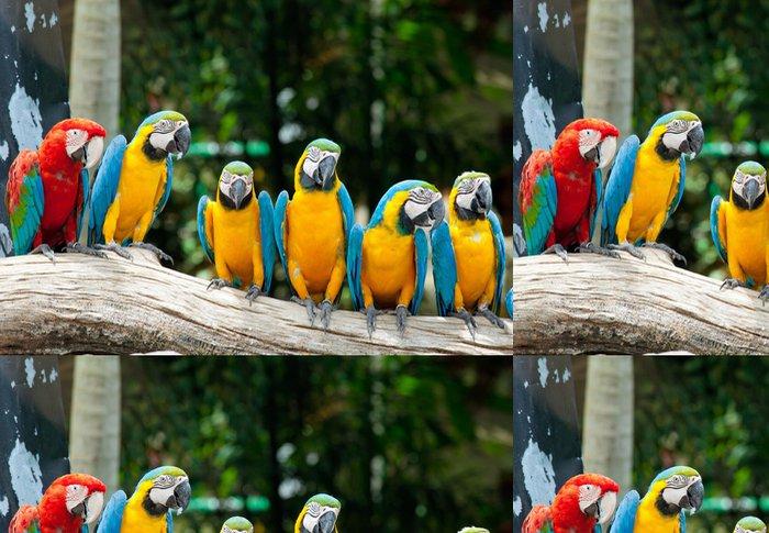 Tapeta Pixerstick Barevné macaws sedí na stromě - Papoušci