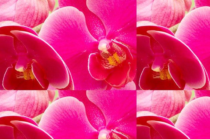 Tapeta Pixerstick Barevné orchideje - Roční období