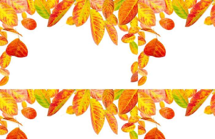 Tapeta Pixerstick Barevné podzimní listí na bílém pozadí - Roční období