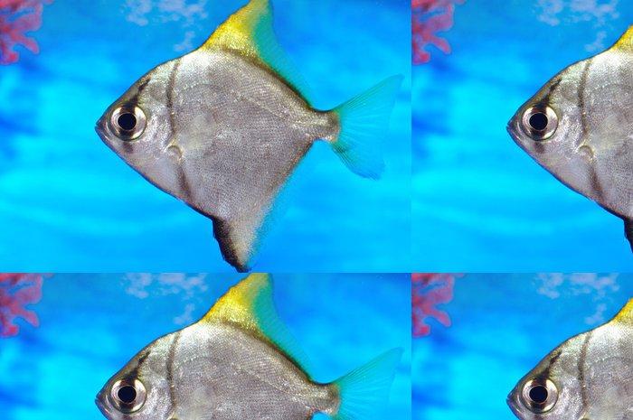 Tapeta Pixerstick Barevné ryby v akváriu se slanou vodou světě - Vodní a mořský život