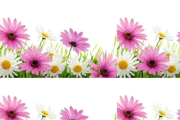 Tapeta Pixerstick Barevné sedmikráska květ v trávě - Domov a zahrada