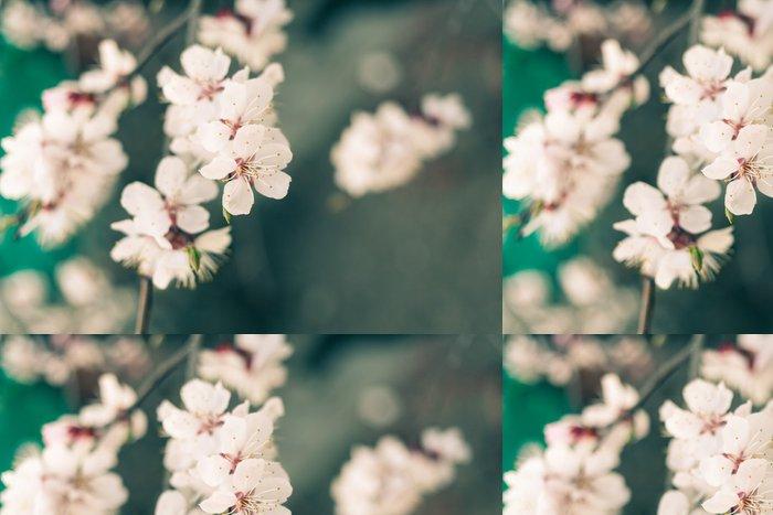 Tapeta Pixerstick Barevného třešňového květu - Styly