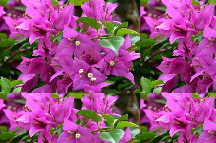 Vinylová Tapeta Barevný Bouganvillea Bush v Singapurské botanické zahrady - Květiny