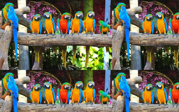 Vinylová Tapeta Barevný papoušek - Témata