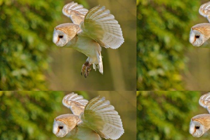 Tapeta Pixerstick Barn Owl létání - Témata