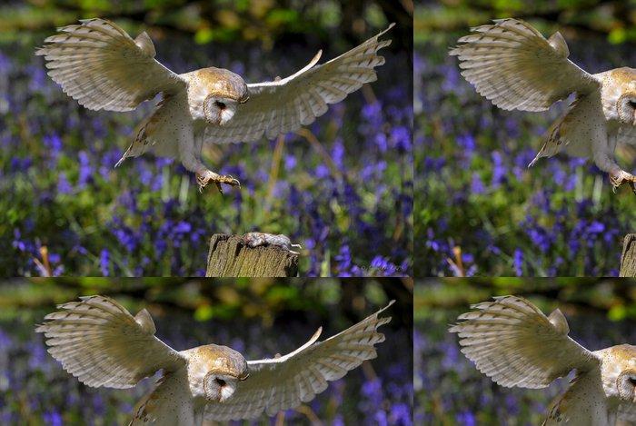 Tapeta Pixerstick Barn Owl v Bluebell Wood 4 - Témata
