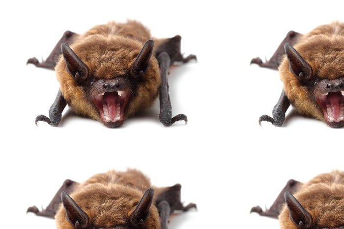 Tapeta Pixerstick Bat izolovaných na bílém - Savci