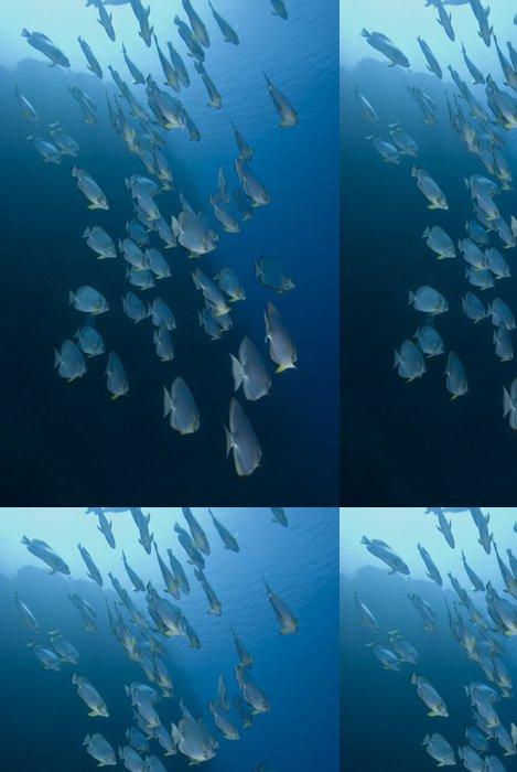 Tapeta Pixerstick Batfish v modrém - Vodní a mořský život